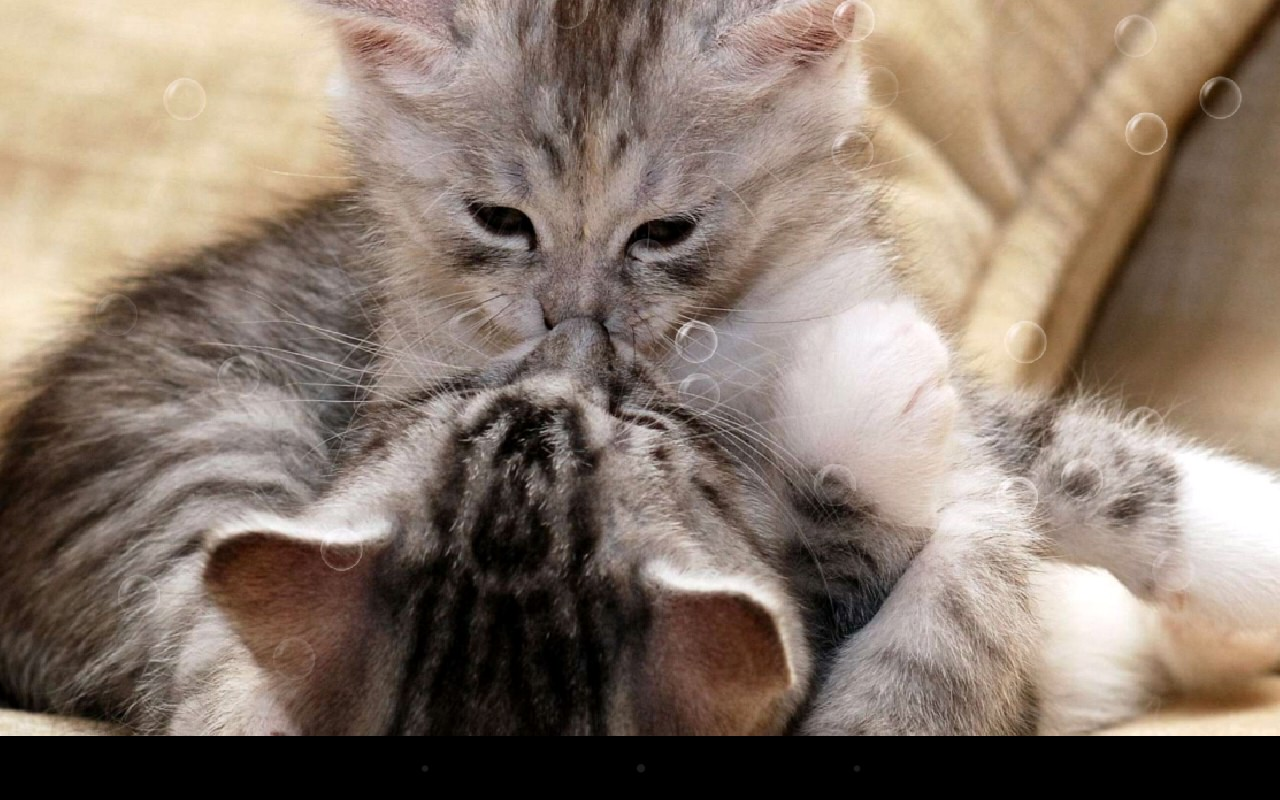برنامه تصویر پس زمینه بامزه گربه برای اندروید Funny Cat Live Wallpaper