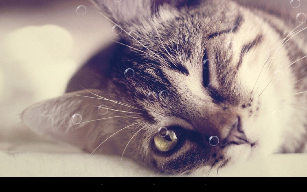 Funny Cat Live Wallpaper369